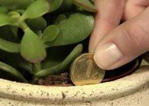planta que atrai dinheiro