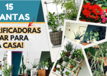 Plantas purificadoras do ar