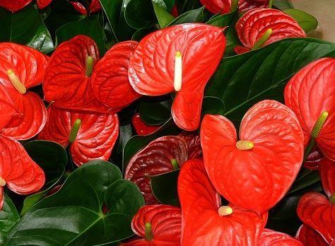 Plantas que vão deixar você mais feliz em casa