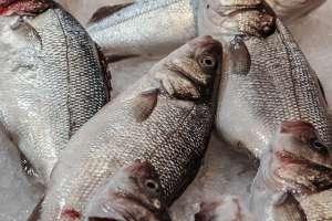 peixe-congelado